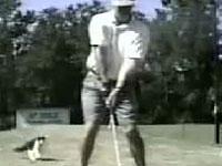ゴルフハプニング