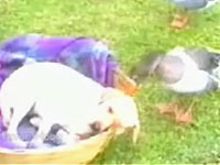 鳥の面白映像