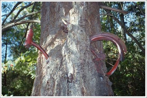 Bicycle-Eating Tree