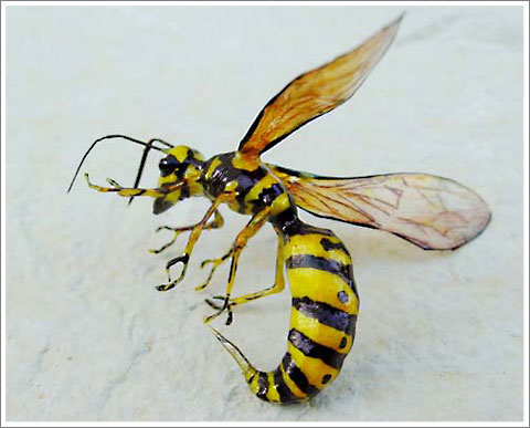 Fly-Bee
