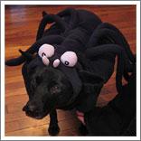 Spider Dog-2