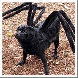 Spider Dog-3