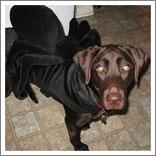 Spider Dog-4