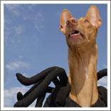 Spider Dog-5