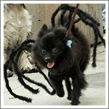 Spider Dog-6