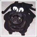 Spider Dog-9