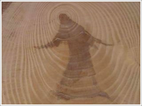 Jesus pine