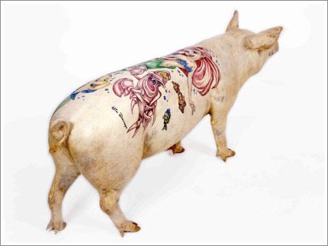 Tatoo Pig