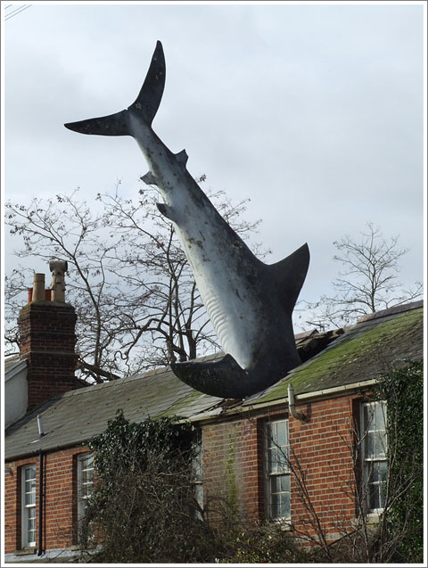 Shark on the Roof