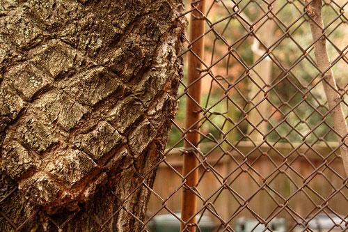 合体樹-3