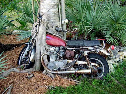 合体樹-8