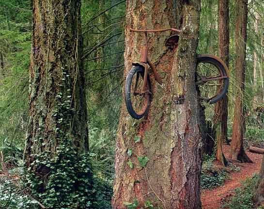 合体樹-9