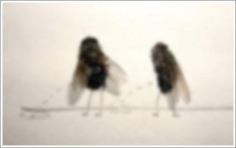 Dead Fly Art