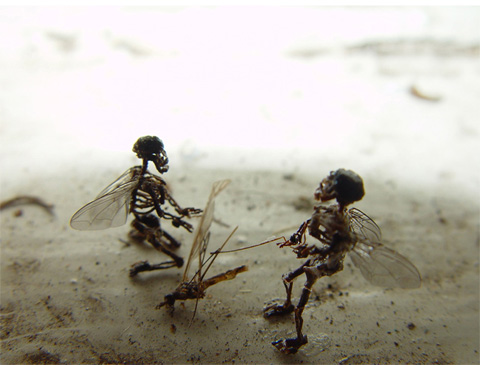 Skeletons vs Insect-1