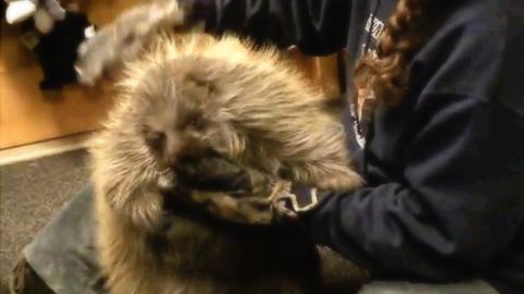 毛むくじゃらの巨大なネズミ