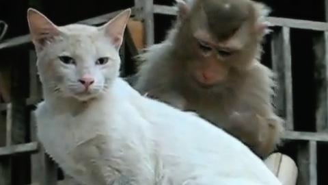 グルーミング猿