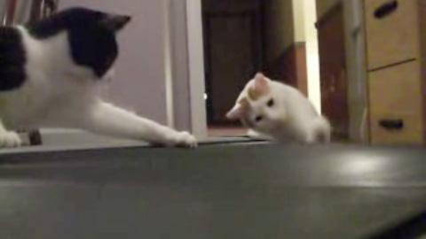 ルームランナー vs. ネコ