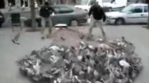 捕獲ネットに捕らえられた大量のハト