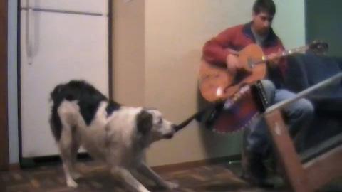 アコーディオンを弾く犬