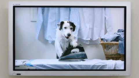 TVコマーシャルで自分をアピールする犬