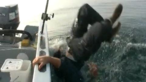 サメを持ち上げようとして海に落ちた男性
